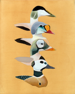 Eider painting by Alex Warnick