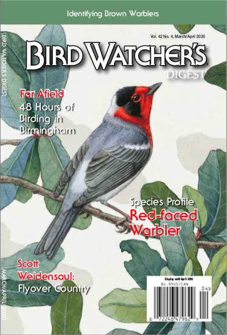 Alex Warnick painting Bird Watcher digest red faced warbler
